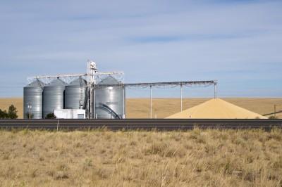 Pszenica bardzo droga w stosunku do kukurydzy