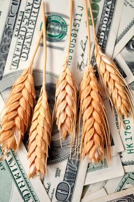 Spadek cen zbóż po zbiorach w Stanach Zjednoczonych