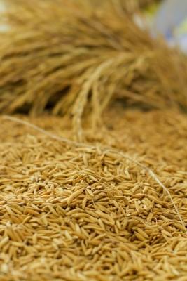 Zbożowy urodzaj dał w kość rolnikom