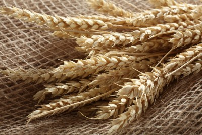 Skup zbóż w trzech kwartałach sezonu 12/13 wyższy o 10 proc.