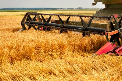 Mocno zaawansowane zbiory zbóż na Ukrainie