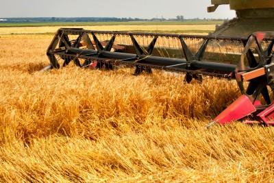 Dobre zbiory zbóż i rzepaku w Niemczech