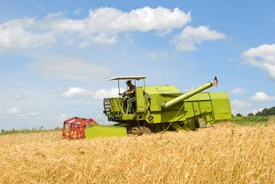 Kanada zebrała rekordową ilość pszenicy