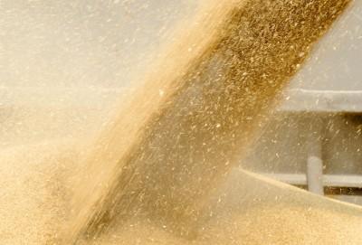 Ceny zbóż w portach