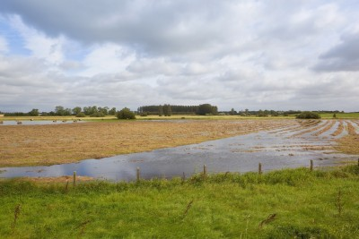 Niekorzystne warunki pogodowe mogą wpłynąć na obniżenie plonów
