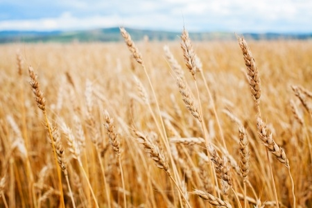 Zmiany cen zbóż
