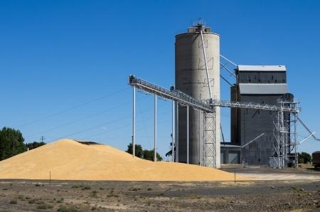Francuski eksport pszenicy w bieżącym sezonie