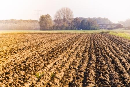 Mniejsza powierzchnia zasiewów rzepaku w UE oraz na Ukrainie