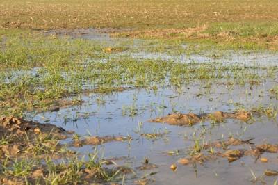 Obfite opady deszczu mogły mieć znaczny negatywny wpływ na uprawy zbożowe