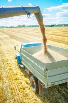 Zbiory zbóż w Kanadzie