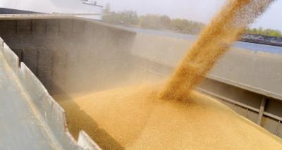 Bezruch w skupach zbóż