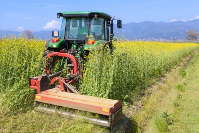 Strategie Grains zwiększa prognozy zbiorów oleistych w Unii