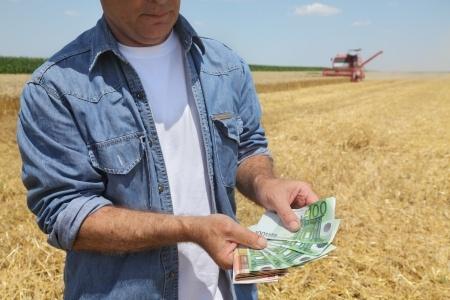 Skup zbóż podczas żniw był niższy o 25 proc.