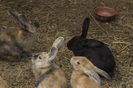 Galopujący królik