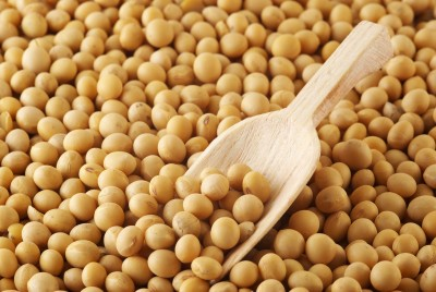 Zasiewy soi w Ameryce Południowej mogą wzrosnąć