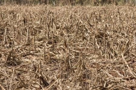 Czas na szacowanie skutków suszy