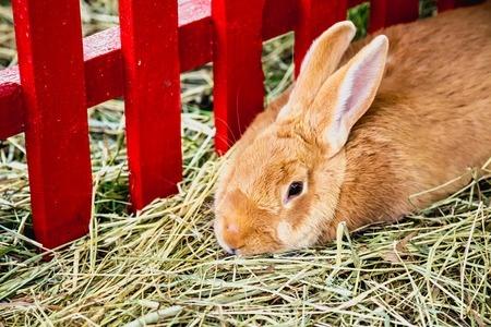 Ile kosztują króliki?