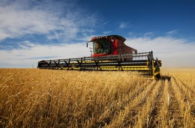 Spadek zbiorów zbóż na Ukrainie