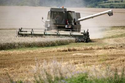 Rosjanie zbiorą mniej zbóż niż planowano