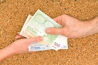 Ceny pszenicy konsumpcyjnej wzrosły w 4 regionach