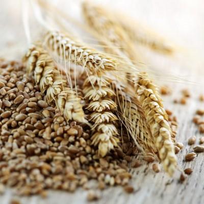 Młyny, a ceny ziarna zbóż