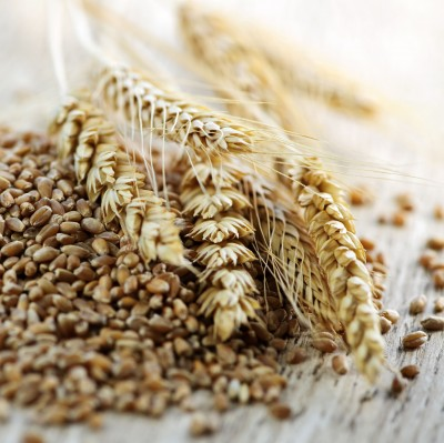 Ruch wśród zbóż