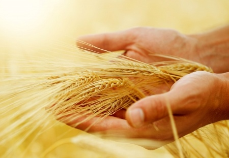 Ceny zbóż spadają