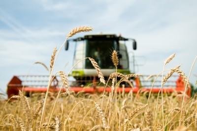 Zbiory zbóż na Ukrainie są już na ukończeniu