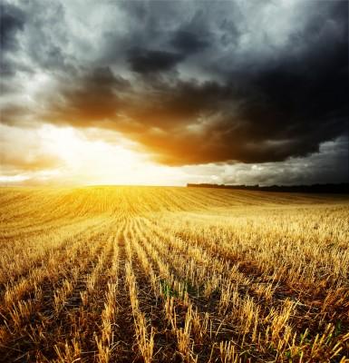 Czarne chmury nad rynkiem zbóż