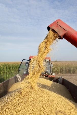 Kukurydza w górę
