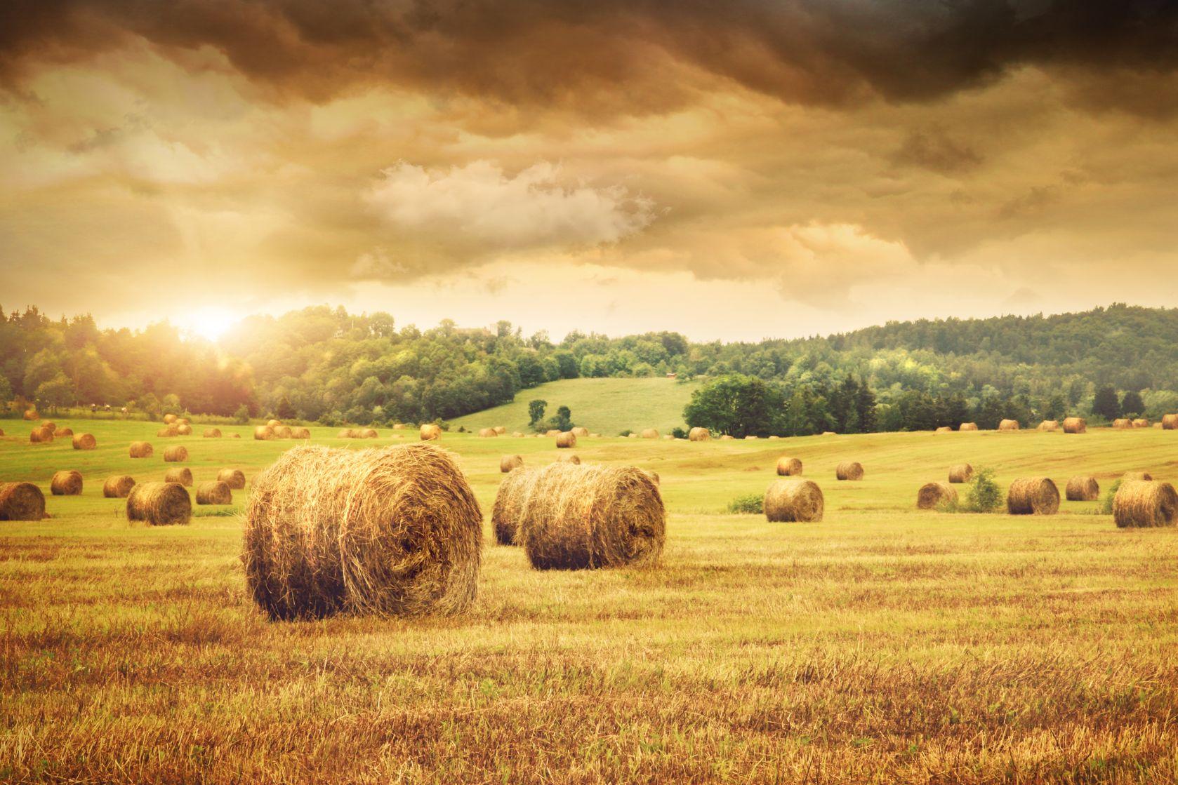ARR: Tegoroczna produkcja zbóż wyniesie 27-28 mln ton
