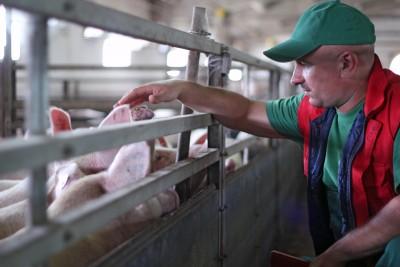 ARR: Wzrosły ceny wieprzowiny