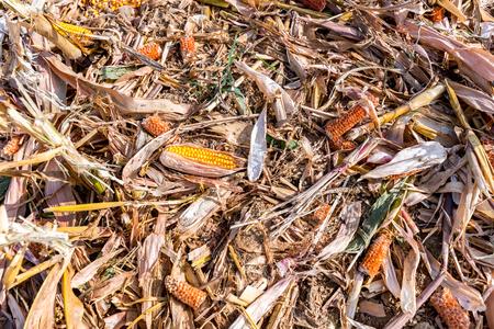 Rekompensaty dla producentów zbóż