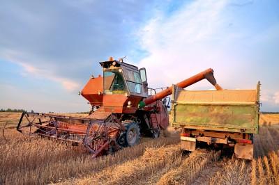 Dobre zbiory zbóż na Ukrainie