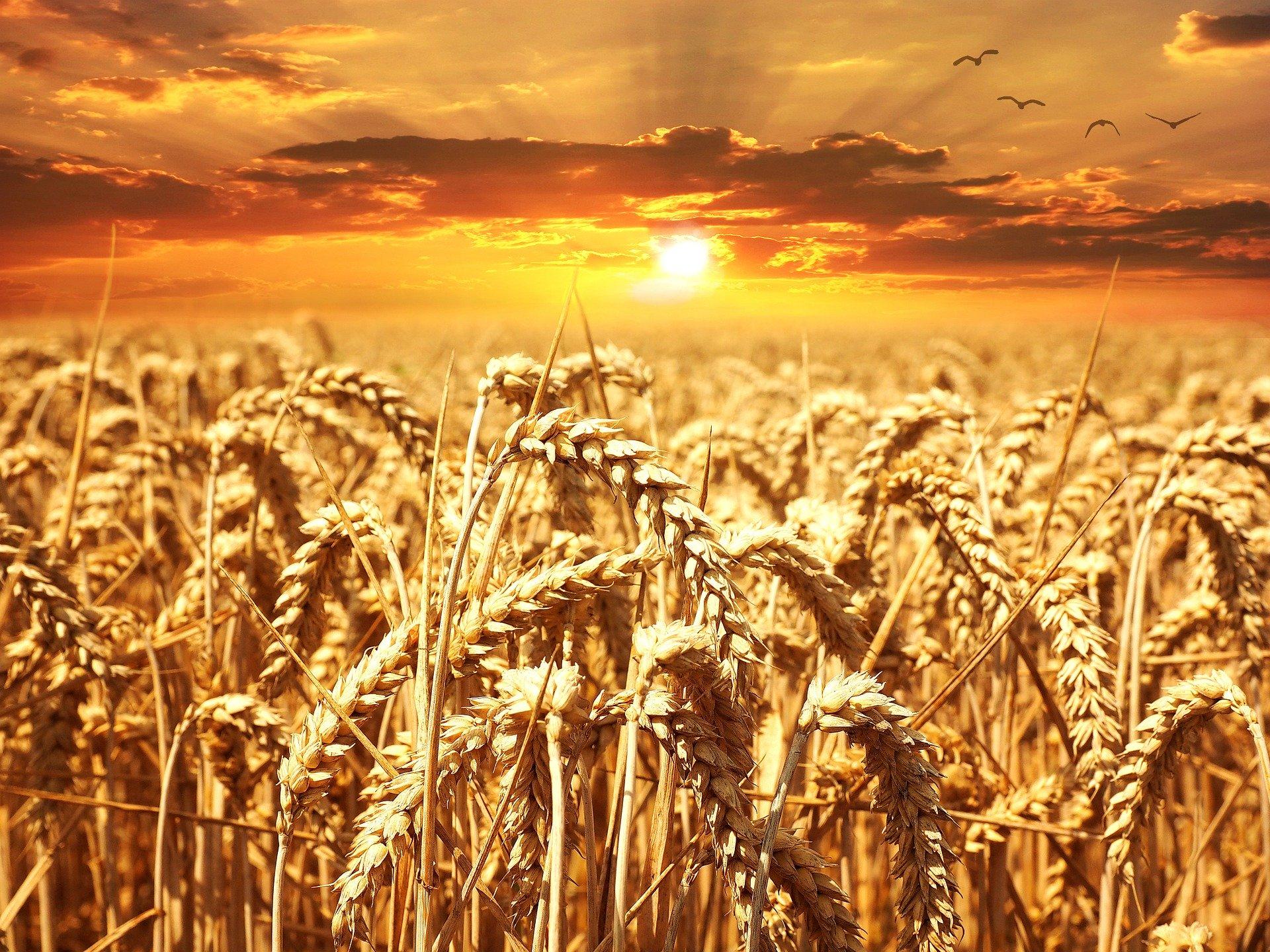 Sprzedaż zbóż i już